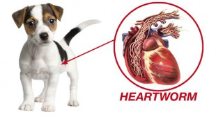 Dog Has Heartworms