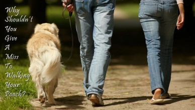 Hidden Benefits of Walking Dogs Yourself