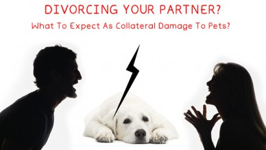 Pets are affected by relationship troubles