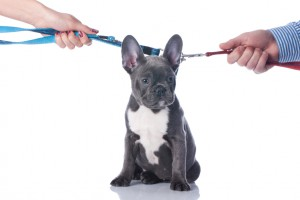 Pets affected by Relationship Troubles