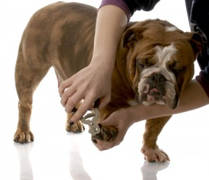 tips-for-nail-trimming-of-dog