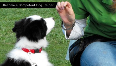 Information On Becoming A Dog Trainer