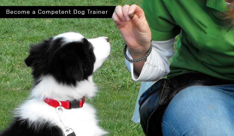 How To Become A Professional Dog Trainer? – 5 Keys To Success For A ...