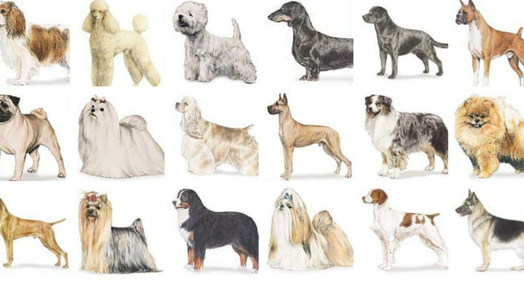Most Popular Dog Breeds in America 2016