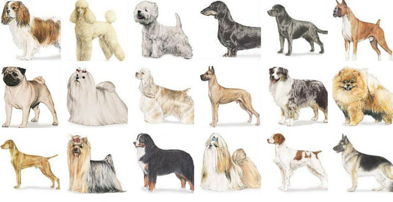 Main Types Of Dog Breeds