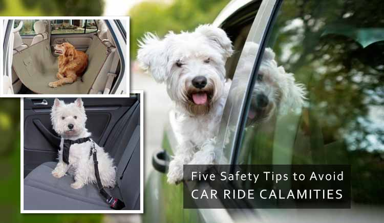 Driving with Dog Then Follow Safety Tips