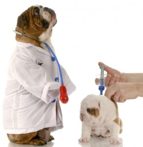 Vaccination Pets Before Going To Dog Park
