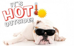 pet safety tips during summer