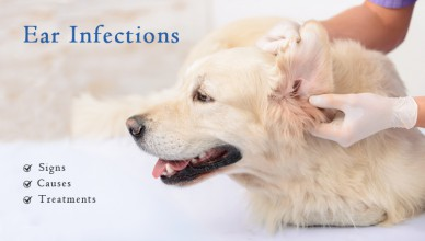 ear infections in pets