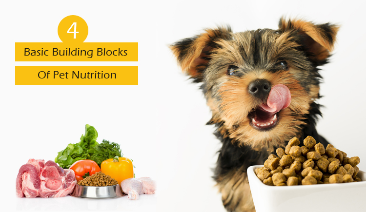 Basic Pet Nutrition