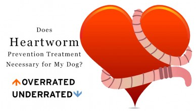 Heartworm Prevention Treatment For Dogs