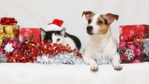 Keep-Your-Pet-Safe-And-Healthy-During-Holidays-Season-Celebration