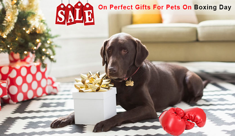 boxing day pet supplies offers