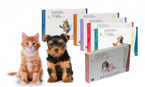 Revolution Heartworm and Flea Treatment