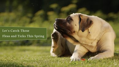 Protect Pets From Fleas and Ticks This Spring