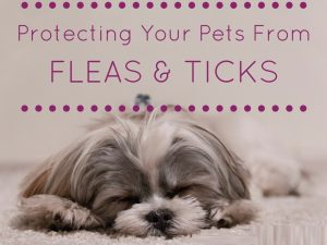 Protecting your Pets from fleas and ticks - BudgetPetWorld.com