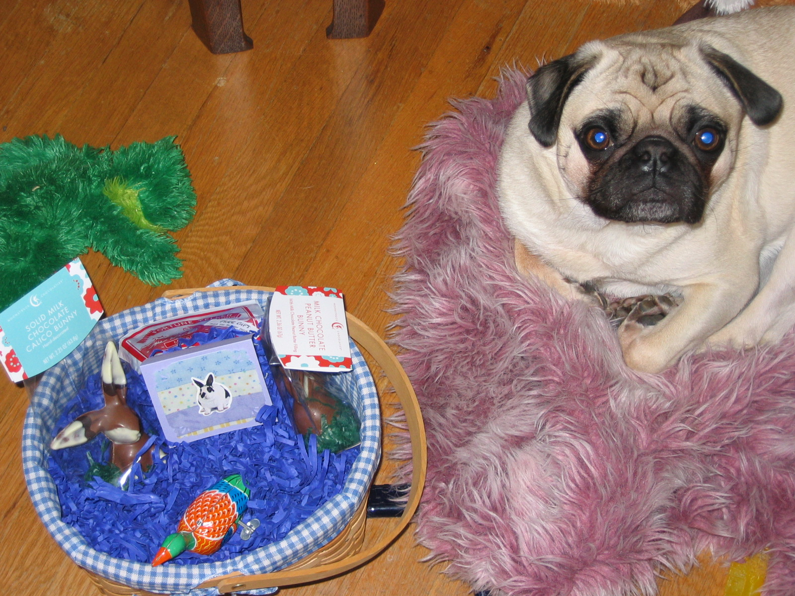 Celebrate easter by building the purrfect bow wow easter goodies get a wood plastic easter basket negle Image collections