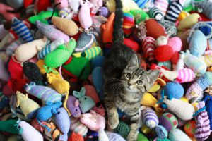 Keep Your Kitty Occupied - Budget Pet World
