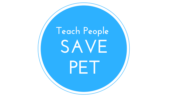 Educate - National Pet Month – Different Ways to Celebrate It | BudgetPetWorld.com