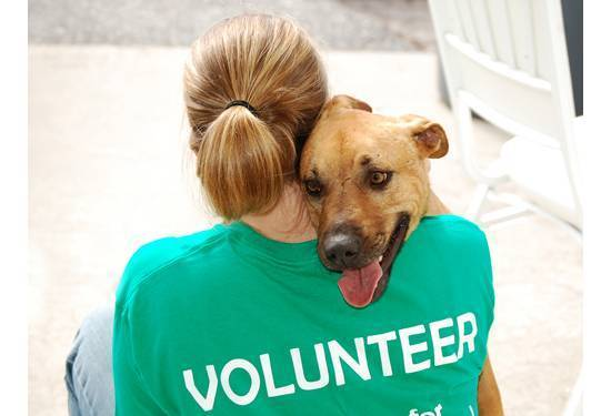 Pet Volunteer - National Pet Month – Different Ways to Celebrate It | BudgetPetWorld.com