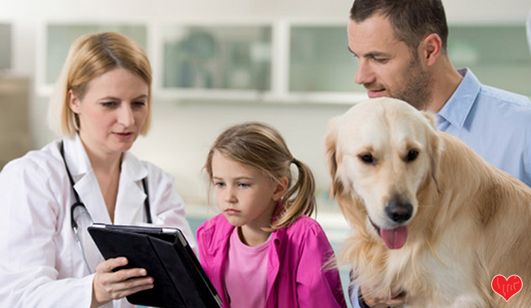7 Questions That You Should Always Ask Your Veterinarian About Heartworm Disease - Budget Pet World Blog