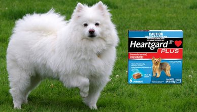 Heartgard Plus – Why Heartworm Prevention Essential for Your Pet? - Budget Pet World