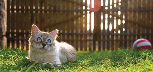 Heat Stroke in Cats - 7 Possible Dangers That Linger Around For Outdoor Loving Cats - Budget Pet World Blog