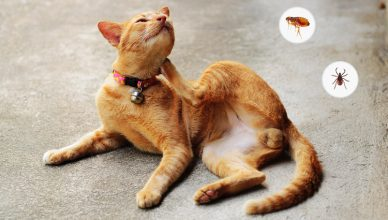 Cats Fleas and Ticks problem