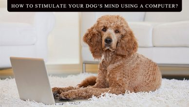 How to Stimulate Your Dog's Mind Using a Computer BudgetPetWorld