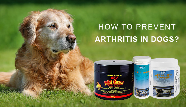 Best Treatments For Arthritis In Dogs