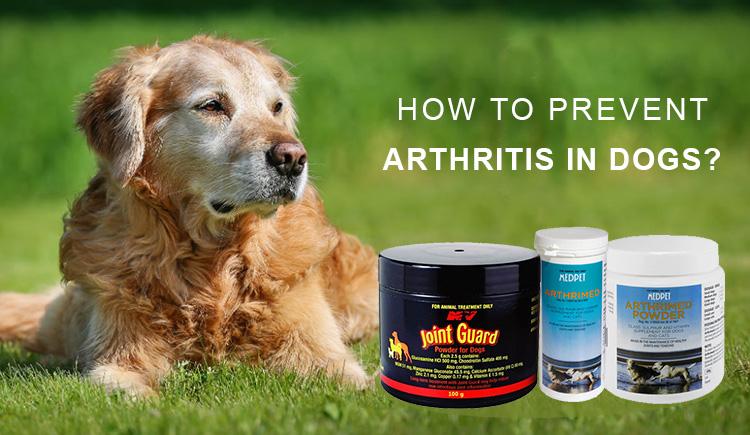 how to avoid arthritis in dogs