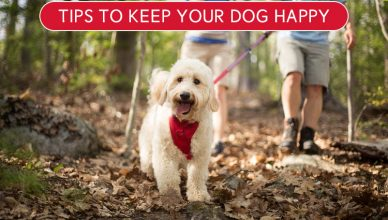 Tips to Keep Your Dog Happy- BudgetPetWorld