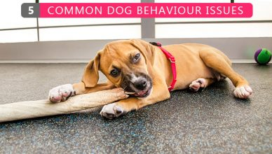 5 Common Dog Behavior Issues - BudgetPetWorld