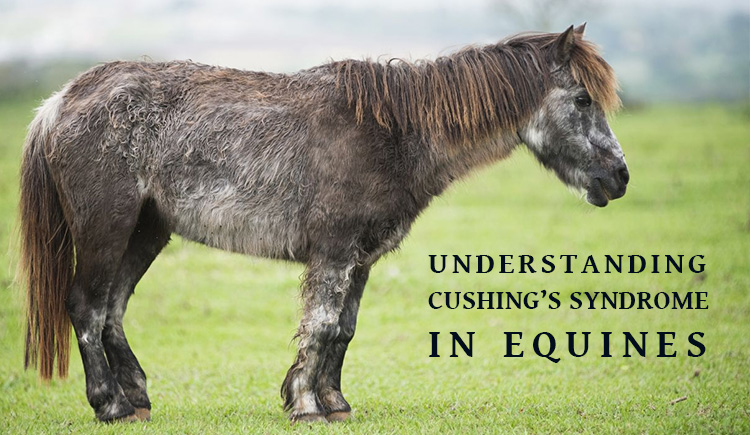 Cushing Equines In horses -BudgetPetWorld