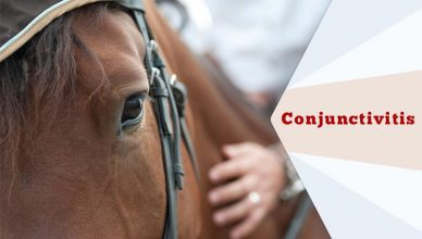 Conjunctivitis-In-Horses