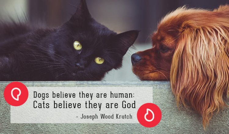 Dogs believe they are human; Cats believe they are God