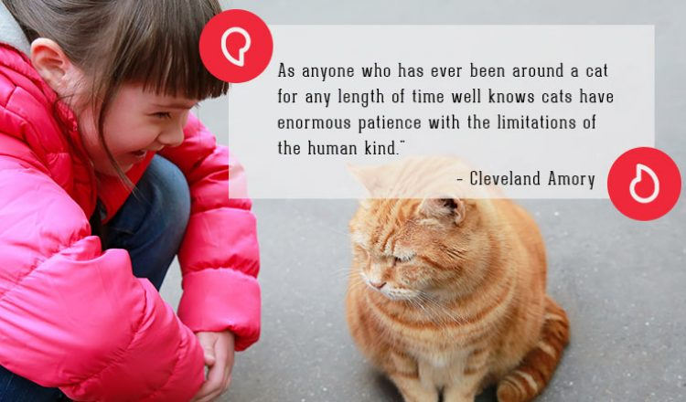 Cleveland Amory on Cats