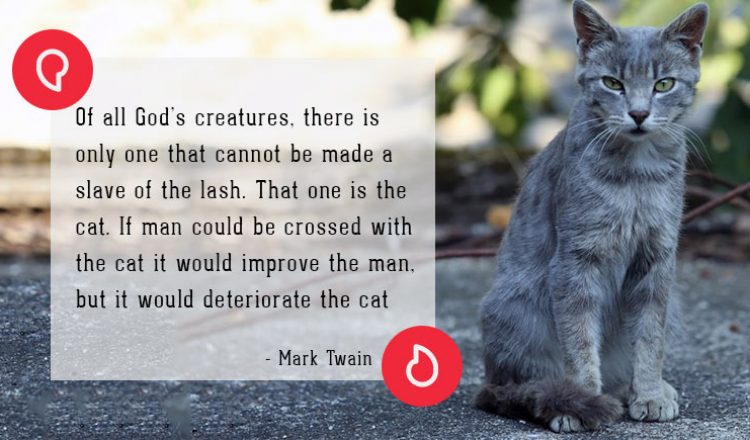 Mark Twain on cats
