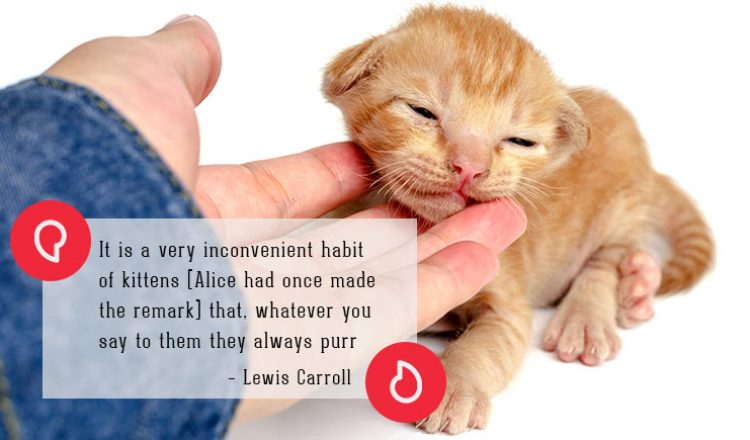 Lewis Carroll on cats