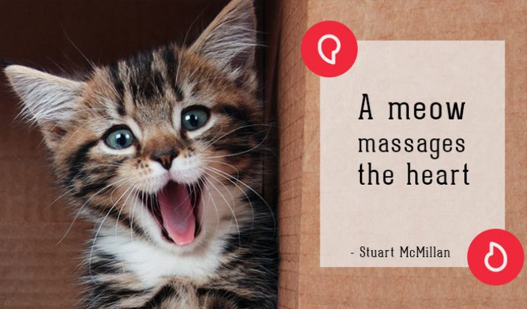 Stuart McMillan on cats
