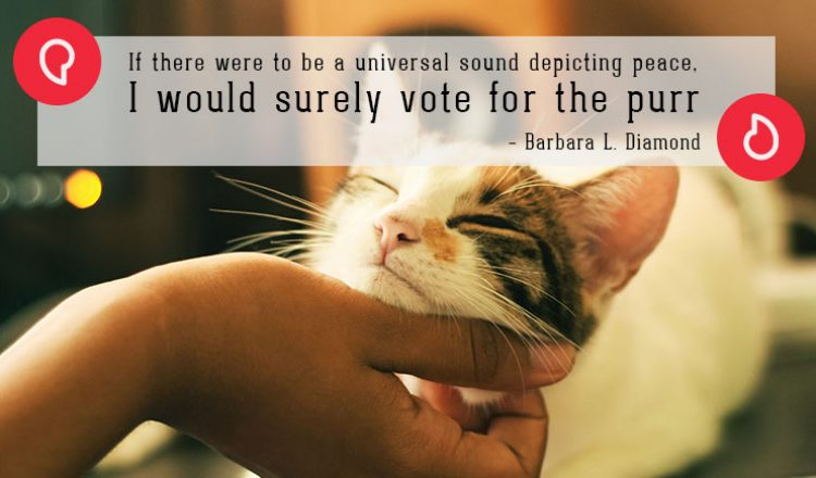 Barbara L. Diamond on cats