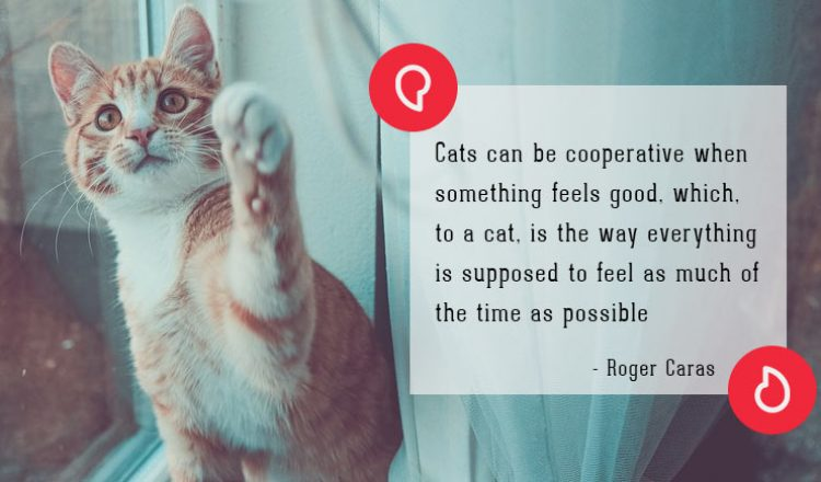 Roger Caras on cats