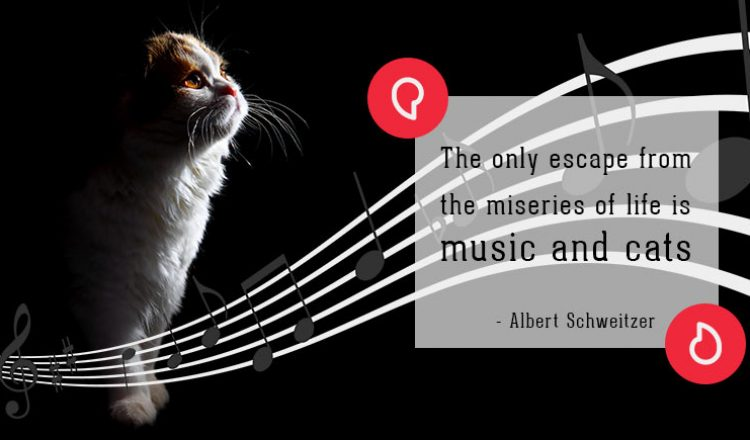 Albert Schweitzer on cats