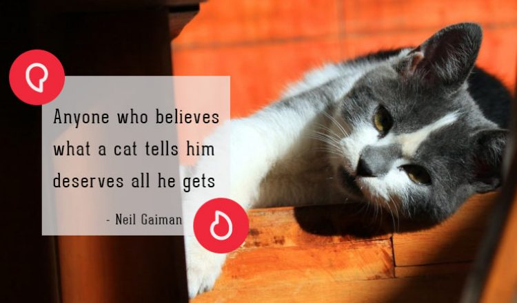 Neil Gaiman on cats