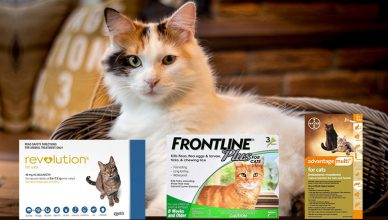 Best Fleas Treatment for cats