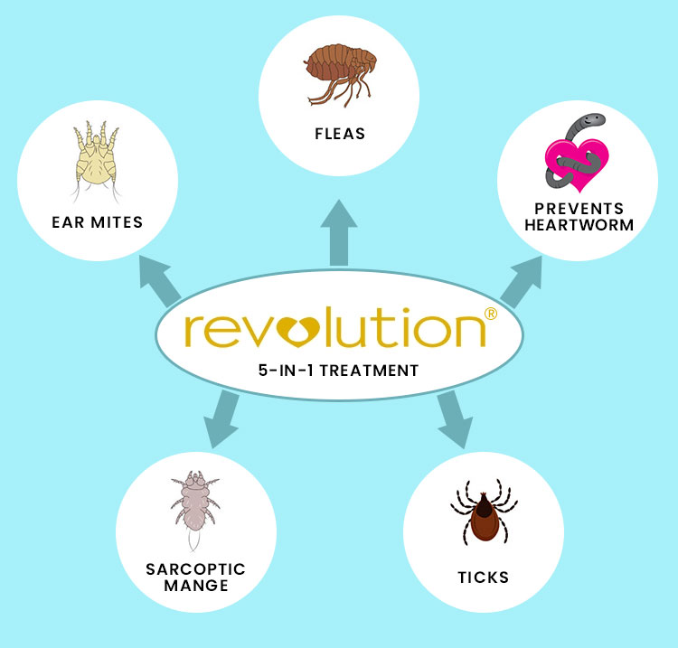 Revolution all in one treatment