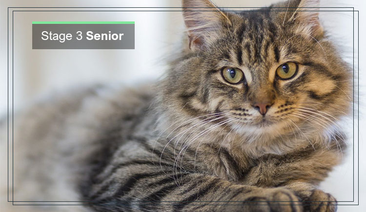 Stage 3 of Cat Senior & Geriatric