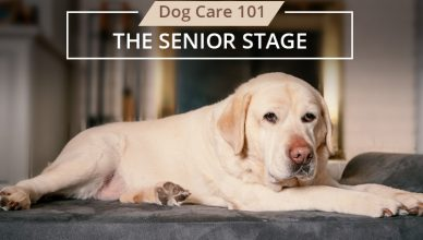 Stage 3 Senior Stage of Dog Life