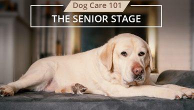 Stage 3 Senior Stage of Dog Life