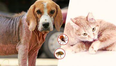 Parasites on Pets Fleas & Ticks